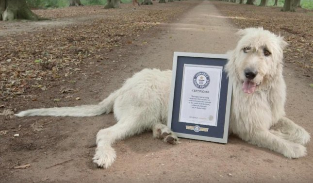Belgian dog's nearly 3-foot tail is world's longest