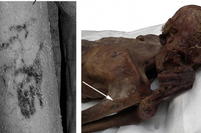 Researchers found a picture of a wild bull and Barbary sheep inked on the arm of an ancient Egyptian mummy. Photo courtesy the British Museum
