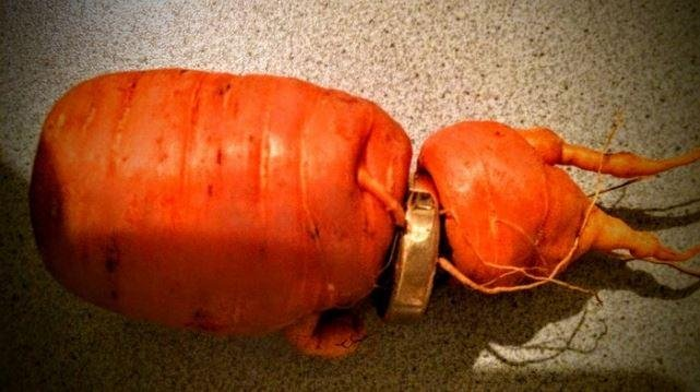 Three years after an 82-year-old German man lost his wedding ring in his garden it reappeared wrapped around a growing carrot. Photo courtesy of WDR