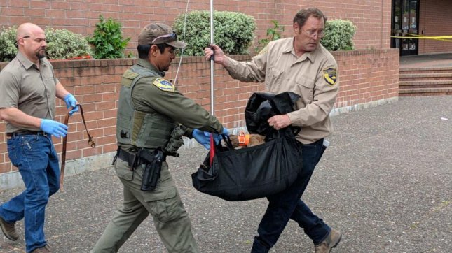 Police and wildlife officials removed a mountain lion that was found wandering Monday outside a Santa Rosa, Calif., shopping mall. Photo courtesy of the Santa Rosa Police Department