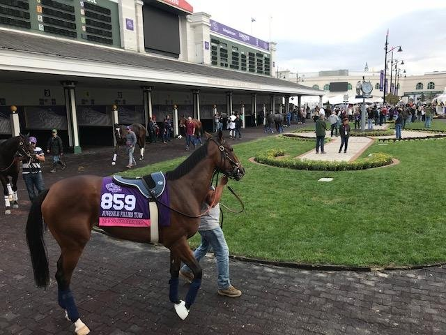 Breeders Cup Preview Future Stars Card Set For Friday