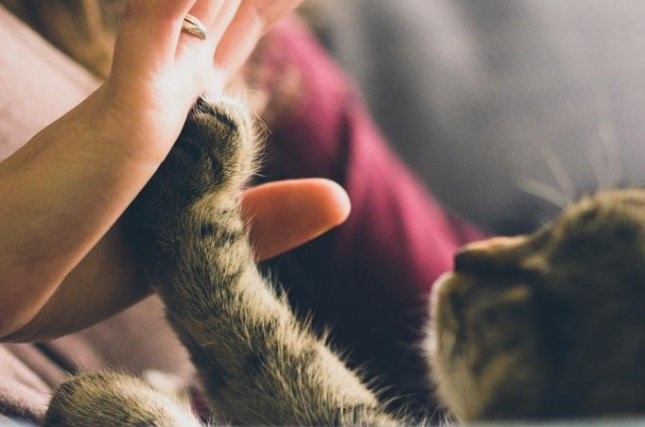 Cats bond with caregivers just like kids, dogs