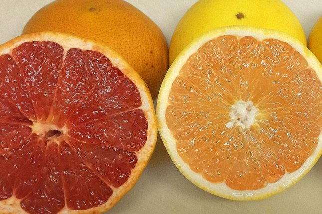 Citrus farmers in Florida are trying new varieties of grapefruit that may be more resistant to citrus greening disease. Photo courtesy of Peace River Citrus