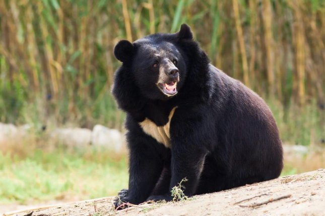 A 63-year-old Japanese fisherman was able to fend off a 6-foot tall Asian black bear by poking it repeatedly in the eye. The unidentified man, who has a black belt in karate, sustained minor injuries and was able to make his own way to the hospital following the encounter. 