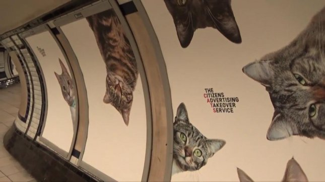 The Clapham Common station will be a little more feline friendly for the next two weeks after an arts group used crowdfunding to buy up all of its advertising space and replace the ads with pictures of cats. Screenshot: Newsflare