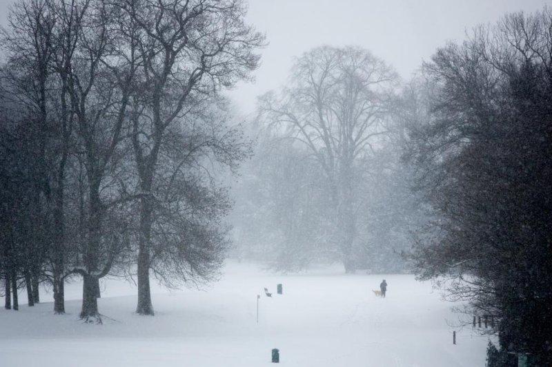 Snow falls on a park in Brussels, Belgium. Photo by Julien Warnand/European Photopress Agency