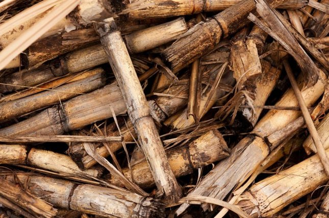 Brazilian use of electricity generated from biomass, most of it from sugar cane, has increased 11 percent in January-August from the same period a year earlier, according to information from the country's sugar cane producer association Unica. Photo courtesy of PublicDomainPictures/Pixabay