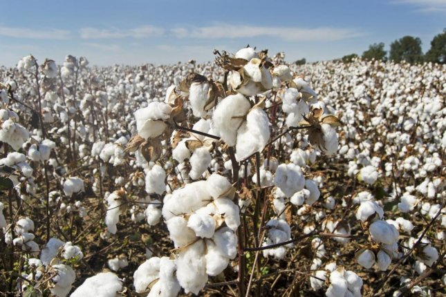 Demand for clothing, textiles and raw cotton has fallen sharply amid the coronavirus pandemic. Photo courtesy of Pixabay