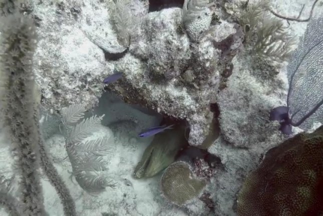 A moray eel's mouth opens and closes as it sleeps off Turks and Caicos. Screenshot: Storyful