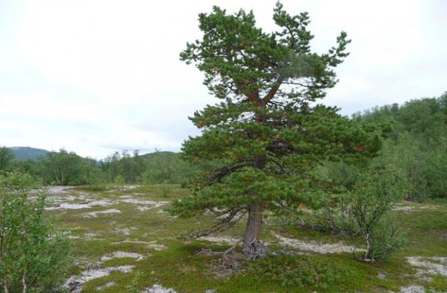 NASA: 30 years of global warming brings trees to the tundra - UPI.com