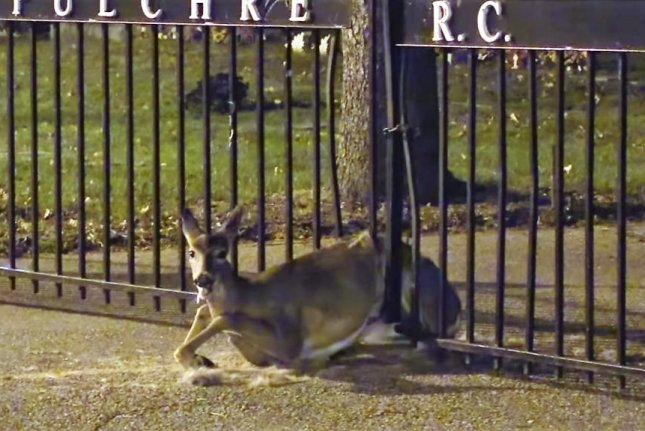 A deer trapped between the metal bars of a fence surrounding a New Jersey cemetery. Screenshot: tornadochaser66/YouTube