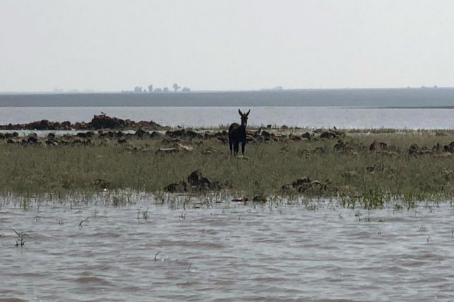 A donkey that had been missing for four weeks in South Africa was rescued by theNational Sea Rescue Institute after being found stranded on a small island. Photo courtesy of NSRIVaal Dam