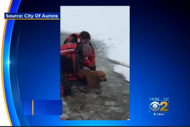 Firefighters rescue Bailey the dog from an Aurora, Ill., retention pond after her owner, Cathy Medernach, was rescued by police. Screenshot: CBS Chicago