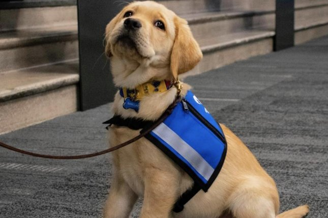 detailed look ea08c 0d9e5 Watch: St. Louis Blues unleash puppy on ice at practice ...
