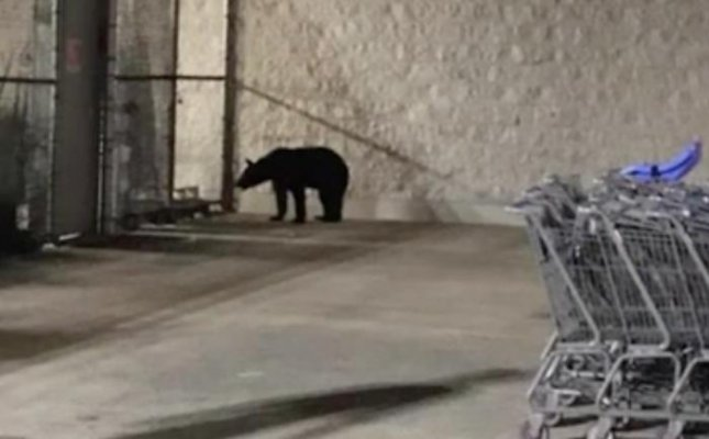 Shoppers at a Kentucky Walmart spotted a black bear wandering the parking lot early Monday morning.  Screen capture/WKYT