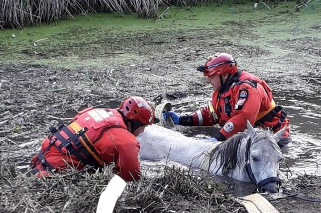 Firefighters in Britain attached a harness to a horse stranded shoulder-deep in muddy water so the equine could be lifted to safety. Photo courtesy of West Sussex Fire & Rescue Service