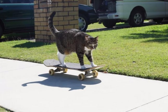 Didga the skateboarding cat shows off her skills after making it into the 2017 Guinness Book of World Records. Screenshot: Guinness World Records/YouTube