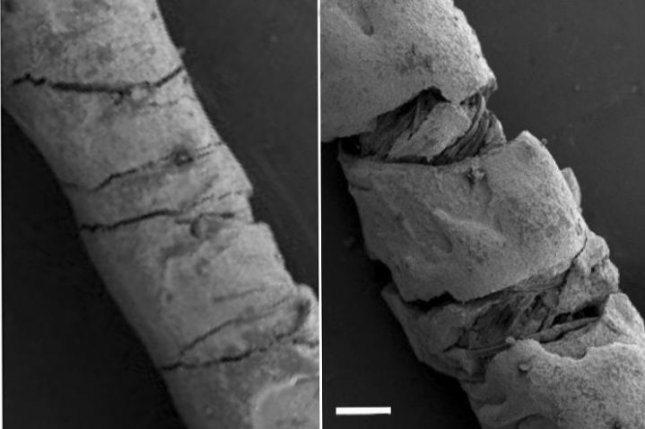 Scanning electron microscopy images of carbon ink-coated threads show a straight thread, L, and a bent thread, R, which changes its electrical conductivity -- a quantity that can be used to calculate the degree of deformation. Photo by Yiwen Jiang/Tufts University