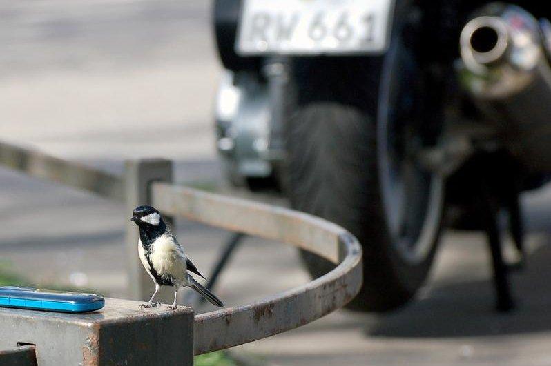 No sólo los gorriones y las palomas: Las ciudades albergan el 20 por ciento de las especies de aves del mundo   Todo sobre las aves