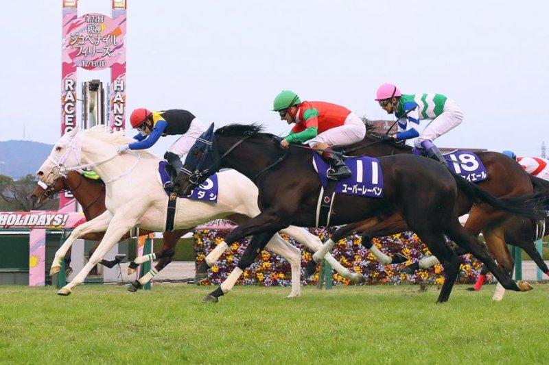 Sodashi (white) wins Sunday's Grade 1 Hanshin Juvenile Fillies, remaining undefeated. Photo courtesy of Japan Racing Association
