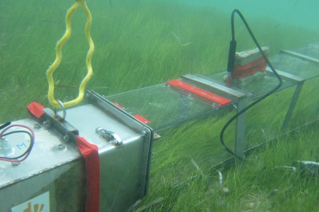 Researchers measured the flow of water across sea grass beds. Photo by Royal Netherlands Institute for Sea Research