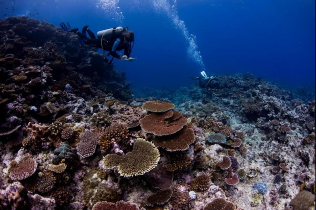 Researchers make several proposals for saving the world's coral reefs after studying more than 2,500 reefs in 44 countries in the Indian and Pacific Oceans. Photo by E. Darling/WCS