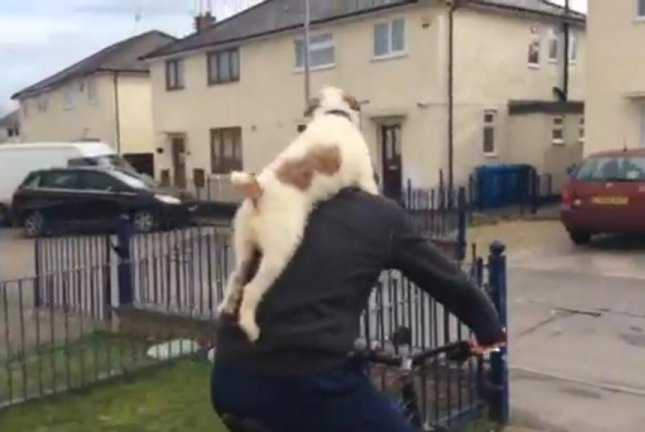 A dog hangs piggy back style on his owner's back while he rides a bike. Screenshot: Newsflare