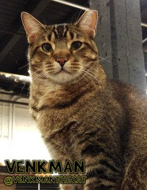 Venkman, a rat-catching cat at Chicago's Empirical Brewery, has gone missing. He is one of four feral cats adopted by the brewery to protect their grains from rodents. 