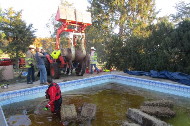 Animal rescuers in Virginia used a tractor and a harness to lift a horse trapped in a swimming pool. Photo courtesy of the Little Fork Volunteer Technical Large Animal Rescue Team