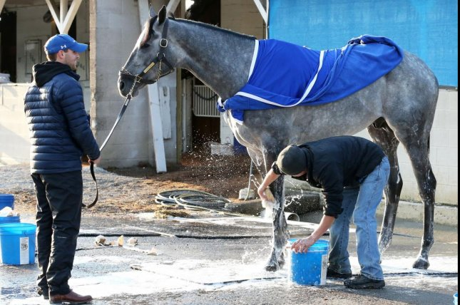 Essential Quality, the likely Kentucky Derby favorite, enjoys his morning bath 10/22 at Churchill Downs. Photo by Coady Photography, courtesy of Churchill Downs