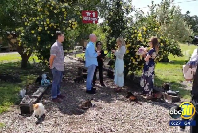 A couple renew their vows at The Cat House on the Kings, an open-air cat sanctuary in California. Screenshot: KFSN-TV