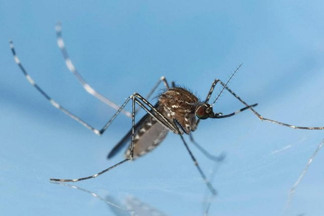 Mosquitoes are undeterred by salt-based solutions. Photo byJoseph Berger/Bugwood.org