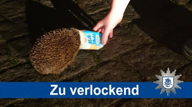 Police in Germany came to the rescue of a hedgehog spotted running through a street with a discarded milkshake cup stuck over its head. Photo courtesy ofBremerhaven Police
