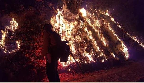 Firefighters work to contain the fire and provide structure protection on the Tellico Fire. Photo courtesy InciWeb