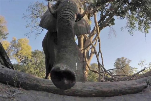 An elephant examines a GoPro camera that is not to the animal's liking. Screenshot: Newsflare