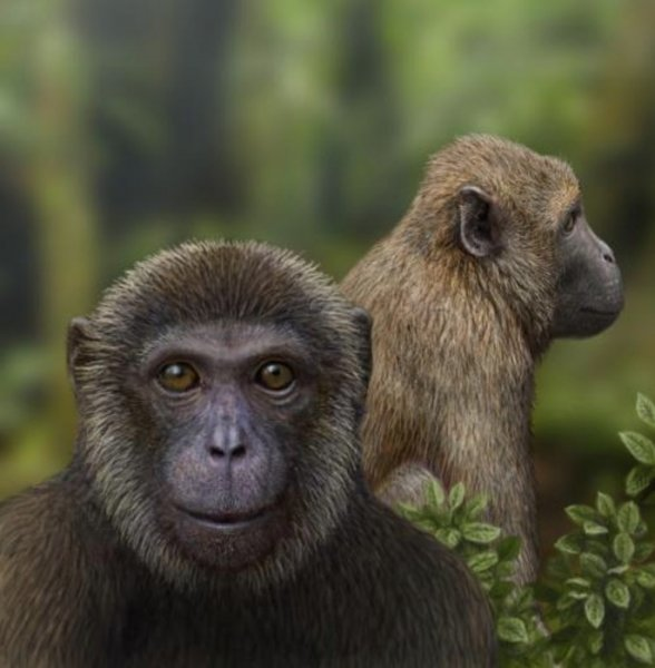 Two fossil discoveries from the East African Rift reveal new information about the evolution of primates. Artist's impression of the newly discovered fossil primates, Rukwapithecus (front, center) and Nsungwepithecus (right). Credit: Mauricio Anton/Ohio University