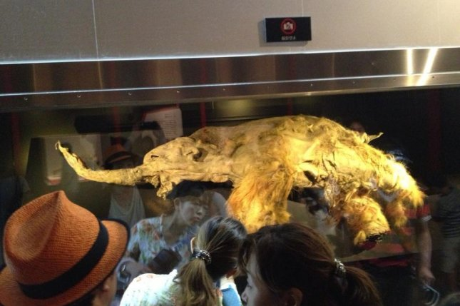 Baby mammoth Yuka goes on display in Russia. Photo by Russian Geographical Society/Administration of Primorsk Krai
