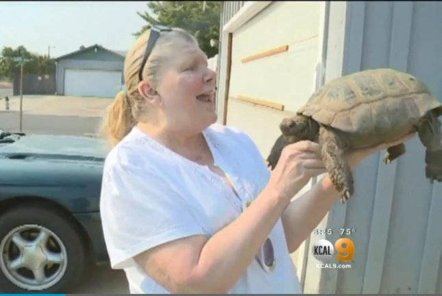Touche the tortoise is reunited with her owner after a 6 1/2 mile journey. Screenshot: CBS Los Angeles