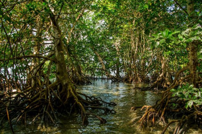 Expanding mangroves offer ecological benefits to ...  Expanding mangr...