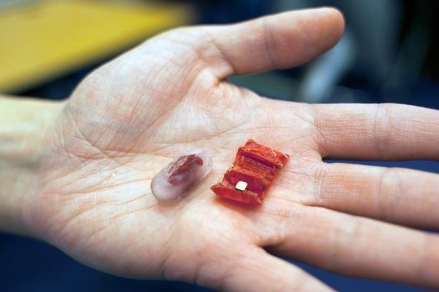 The ingestible origami robot is designed to retrieve swallowed button batteries and repair small wounds. Photo by Melanie Gonick/MIT