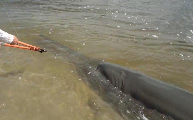 Joshua Jorgensen of YouTube channel BlacktipH sought help from the Florida Fish and Wildlife Commission after hooking a massive 17-foot sawfish. FWC officials met with Jorgnensen to help him ensure the endangered fish was safely released back into the water. 