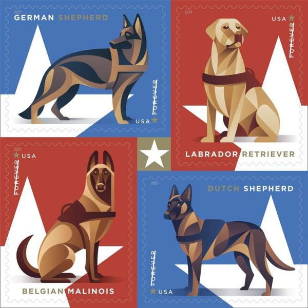 Designed by USPS Art Director Greg Breeding, each of the four stamps features one of the four most common breeds of dog in the U.S. military: German shepherd, Labrador retriever, Dutch shepherd and Belgian Malinois. Photo courtesy of U.S. Postal Service/Website