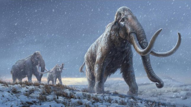 Researchers say that steppe mammoths, like those in the illustration, preceded the woolly mammoth, based on newly discovered genetic information from the Adycha mammoth. Illustration by Beth Zaiken/CPG