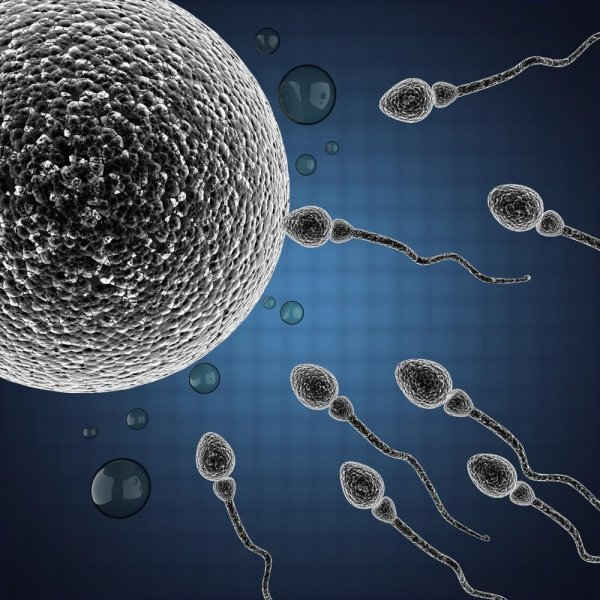 In order to design a male contraceptive, scientists must understand the molecules involved with sperm fertilization of the egg and each step of the fertilization process. Photo by videodoctor/Shutterstock