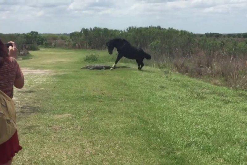 A wild horse attacks an alligator at a Florida state park. Screenshot: Krystal M. Berry/Facebook