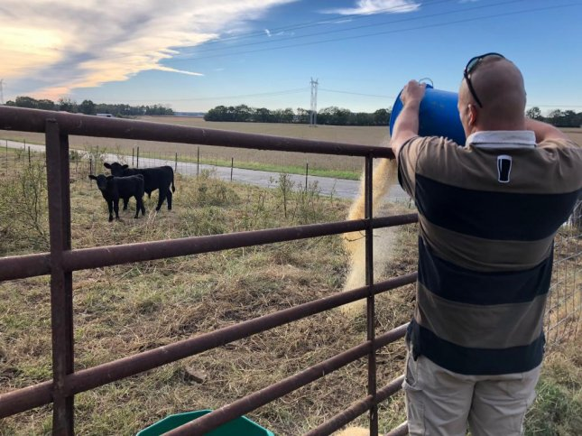 Elias Donker, a retired Army major, feeds the calves on his small farm near Terre Haute, Ind. Photo by Jessie Higgins/UPI