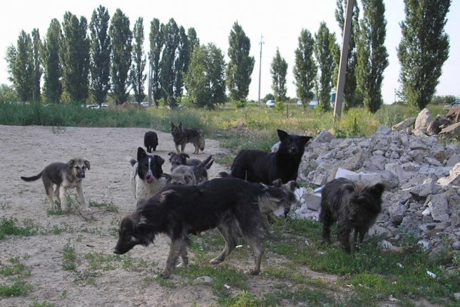 Scientists found aggression levels were greatest among stray dogs stuck in the middle of their pack's social ladder. Photo by Wikimedia Commons