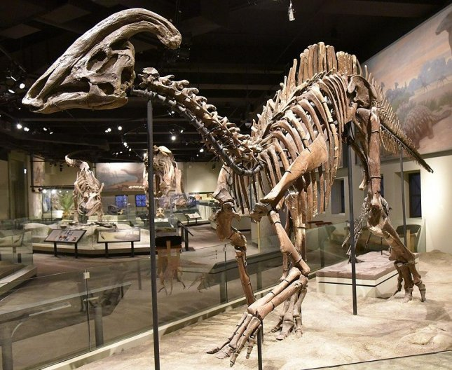 Researchers say a new skull fossil of Parasaurolophus -- an example of which is pictured at the Field Museum of Natural History in Chicago -- has better revealed the structure of the dinosaur's head crest. Photo by Zissoudisctrucker/Wikimedia
