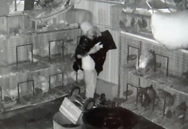 A man wearing a trash bag and a bucket on his head broke into a Miami store and stole about 40 high-priced pigeons. The store's owners Nelson and Mae Hernandez said it was the second break in within a year despite increases to security including security cameras and barbed wire fences.  Screen capture/Miami Herald