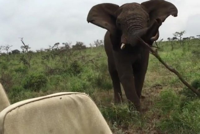 An elephant chucks a tree branch at a Jeep full of tourists in South Africa. Screenshot: Newsflare